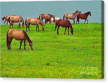 Horses Graze By Seaside Canvas Print by Thomas R Fletcher
