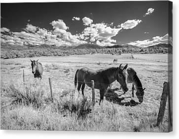 Horses Of San Juan Canvas Print by Jon Glaser