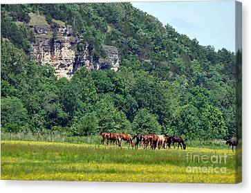 Horses On The Rubideaux Canvas Print by Marty Koch