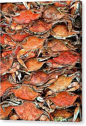 Hot Crabs Canvas Print by Sky Noir Photography by Bill Dickinson