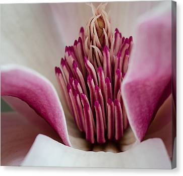Hot Pink Canvas Print by Don L Williams