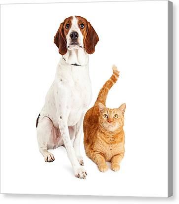 Hound Dog And Orange Cat Together Canvas Print by Susan Schmitz