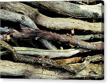 How Much Wood Would A Woodchuck Chuck Natural Wood Pile Ledge Park Wisconsin Canvas Print by Laura Pineda