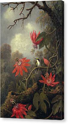 Hummingbird And Passion Flowers Canvas Print by Martin Heade