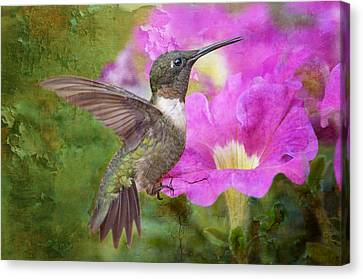 Hummingbird And Petunias Canvas Print by Bonnie Barry