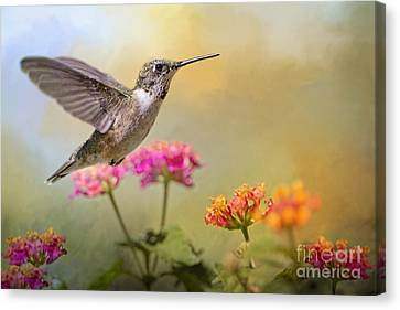 Hummingbird In The Garden Canvas Print by Bonnie Barry