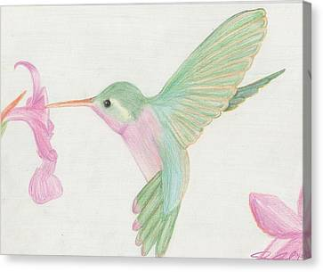 Hummingbird Canvas Print by Joanna Aud