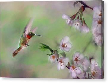 Hummingbird Canvas Print by Lori Deiter