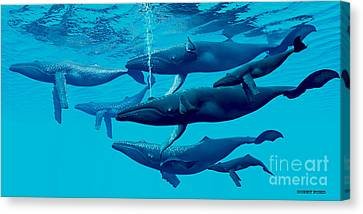 Humpback Whale Group Canvas Print by Corey Ford