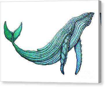 Humpback Whale Canvas Print by Nick Gustafson