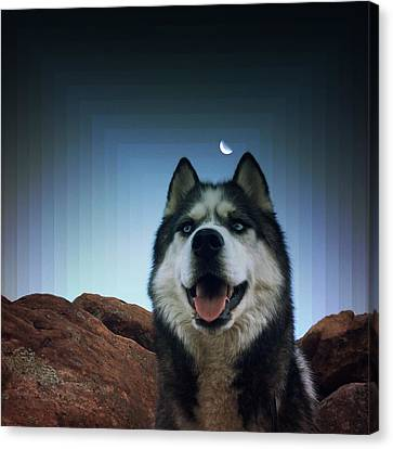 Husky Canvas Print by Brennan Gallegos