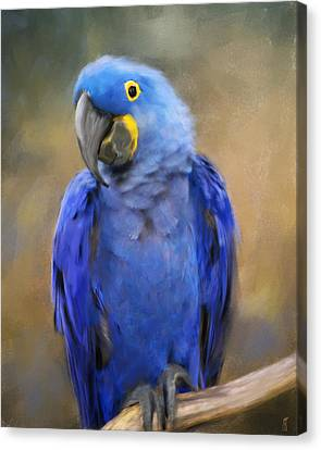 Hyacinth Macaw  Canvas Print by Jai Johnson