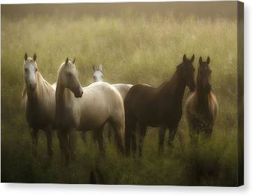 I Dreamed Of Horses Canvas Print by Ron  McGinnis