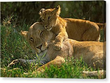 I Love My Mother Canvas Print by Johan Elzenga