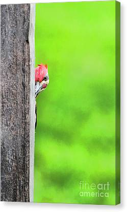 I See You Canvas Print by Dan Friend