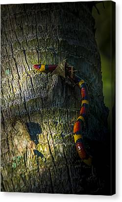 I See You Canvas Print by Marvin Spates