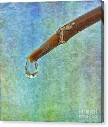 Ice Drop Oo Canvas Print by SK Pfphotography