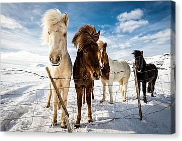 Icelandic Hair Style Canvas Print by Mike Leske