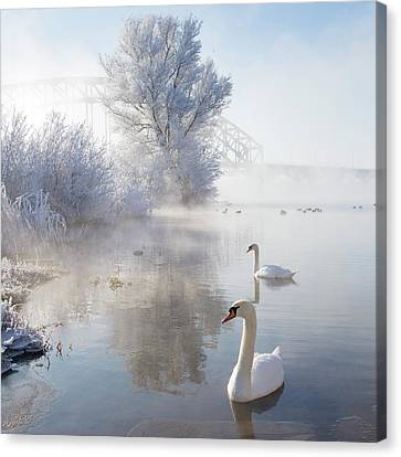 Icy Swan Lake Canvas Print by E.M. van Nuil