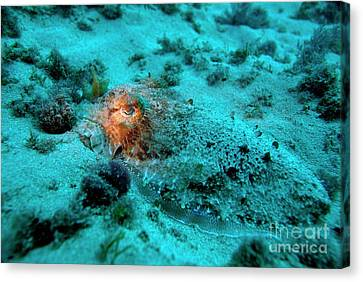 Illuminated Eye Of A Common Cuttlefish Canvas Print by Sami Sarkis