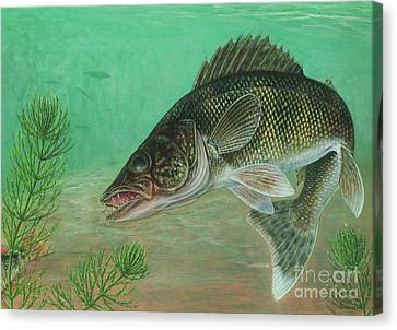 Illustration Of A Walleye Swimming Canvas Print by Carlyn Iverson