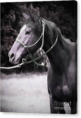 In  Express Canvas Print by Jacque The Muse Photography