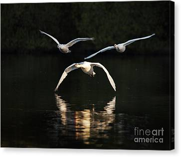 In Formation Canvas Print by Richard Garvey-Williams