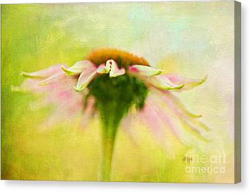 In Perfect Harmony Canvas Print by Lois Bryan