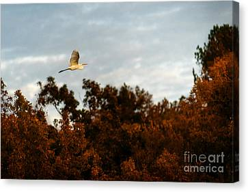 In Search Of The Flock Canvas Print by Tamyra Ayles
