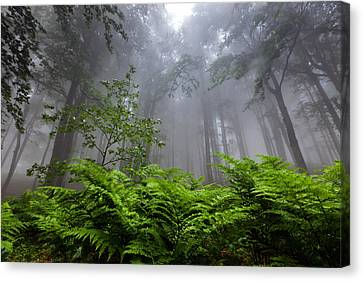 In The Murky Wood Canvas Print by Evgeni Dinev