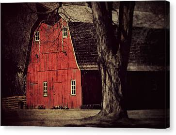 In The Spotlight Canvas Print by Julie Hamilton