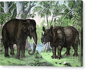 Indian Elephant And Rhinoceros Canvas Print by Biodiversity Heritage Library