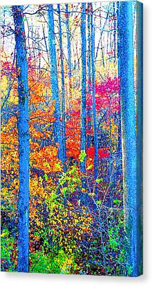 Indiana Autumn Woods Image Canvas Print by Paul Price