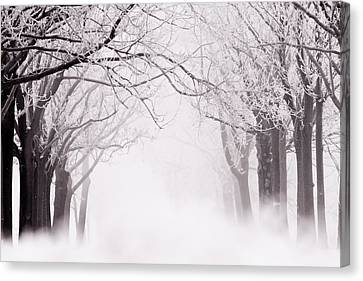 Infinity - Trees Covered With Hoar Frost On A Snowy Winter Day Canvas Print by Roeselien Raimond