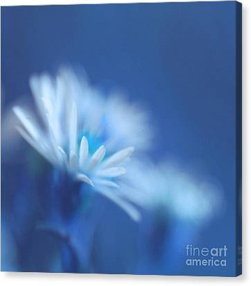 Innocence 11b Canvas Print by Variance Collections