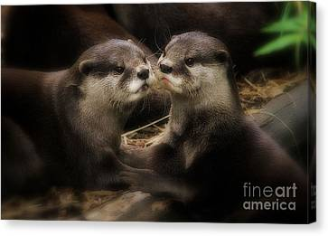 Innocence Canvas Print by Kym Clarke