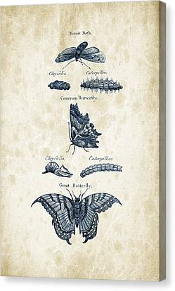 Insects - 1792 - 12 Canvas Print by Aged Pixel