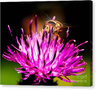 Insects Up Close Canvas Print by Chris Smith