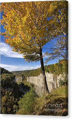 Inspiration Point Canvas Print by Louise Heusinkveld