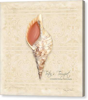 Inspired Coast 2 - Triton's Trumpet  Chaeronea Tritonis Shell Canvas Print by Audrey Jeanne Roberts