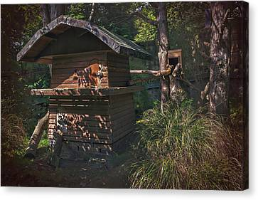 Into The Woods Canvas Print by Carol Japp