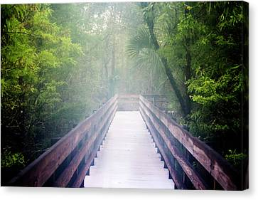Into The Woods Canvas Print by Cheryl Howard