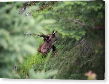 Into The Woods Canvas Print by Stacey Scott