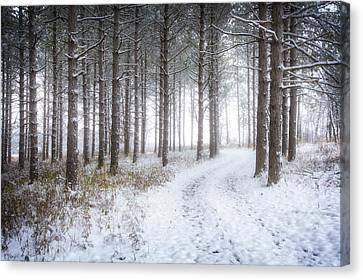 Into The Woods - Winter At Retzer Nature Center  Canvas Print by Jennifer Rondinelli Reilly - Fine Art Photography