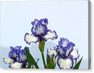 Iris 15 Canvas Print by Allen Beatty