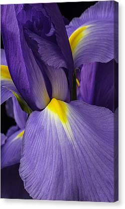 Iris Close Up Canvas Print by Garry Gay