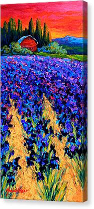 Iris Farm Canvas Print by Marion Rose