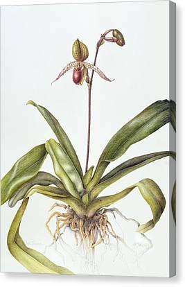 Iris Canvas Print by Margaret Ann Eden