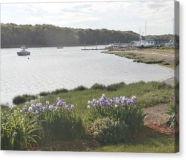 Irises By The Bay Canvas Print by Kate Gallagher