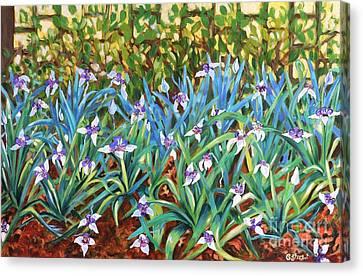 Irises Canvas Print by Caroline Street